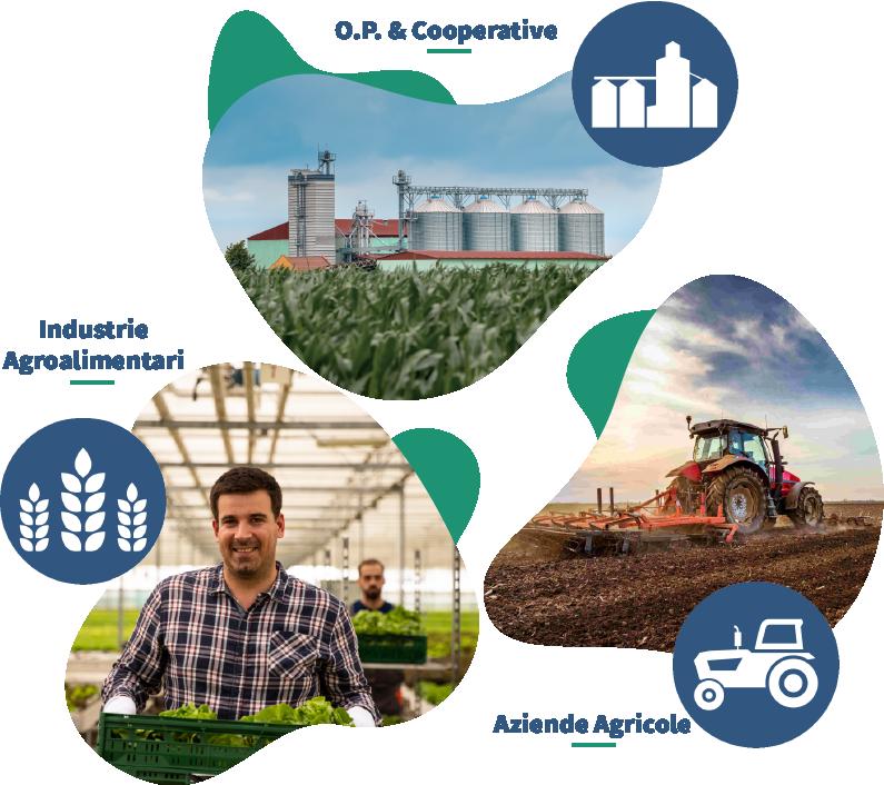Progetti agroindustriali, Progettazione Filiere agroalimentari, industrie agroalimentari, cooperative agricole, aziende agricole